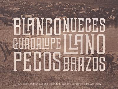 TEHAUS Specimen typography