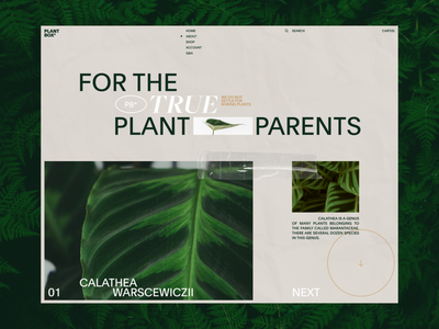Plant Box Experimental No.2 homepage typography ui web design clean minimal website landing page layout vietnam