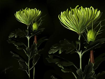 plant illustration V2