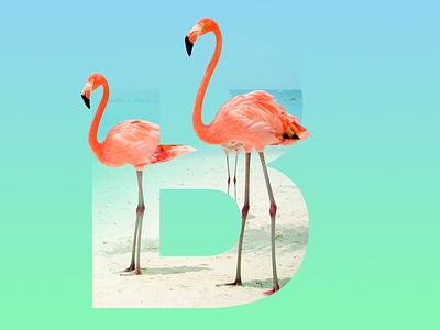 """The letter """"B"""" design trend flamengo letter gradient"""