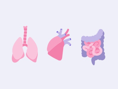Human Organs material design flat icon medicine human lungs intestines illustration anatomy heart