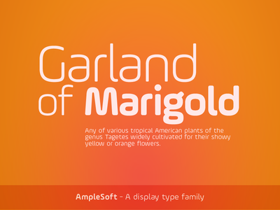 AmpleSoft - A display type family ample soft typeface type design soneritype aakash soneri