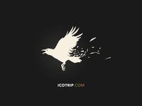 Icotrip.com - crow.