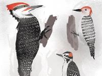 So Many Woodpeckers!