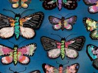 Firecracker Moths