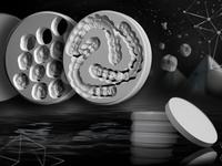 Zirconia Dental Discs