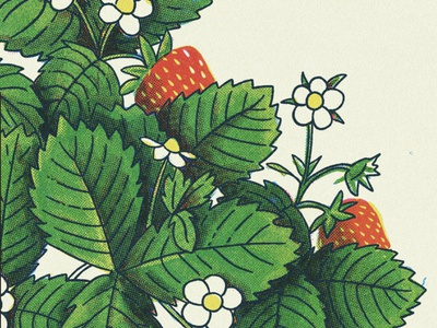 Strawberries spring leaves vintage retro halftone plant strawberry sketch texture illustration