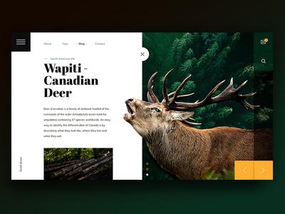 The Deer wapiti deer website landing page web creative yellow green forest graphics photoshop ui ux
