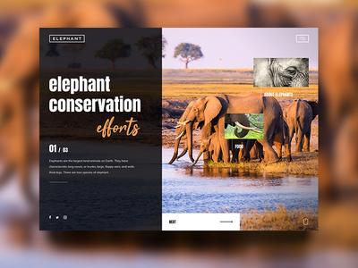Elephant Conservation inspiration design effort ngo conservation water orange ui ux safari animal elephant