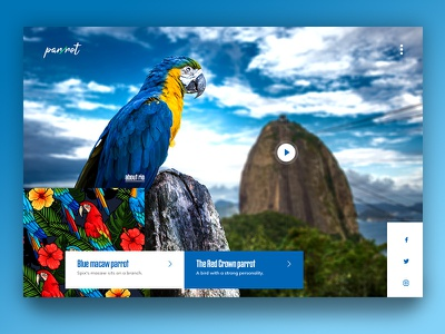 Blue Macaw design web page website branding ux ui mountain rio animal blue macaw parrot