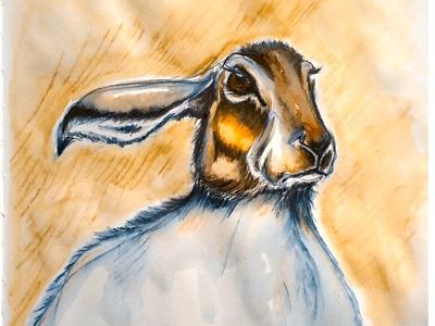 Unimpressed Hare animals illustration hare derwent inktense