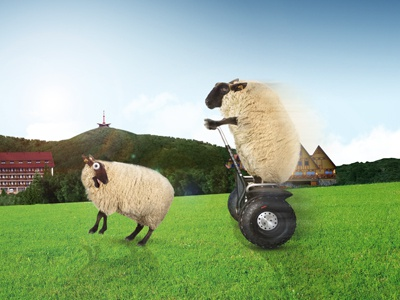 Crazy sheeps concept for mountain hotel resort photo montage postproduction