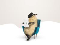 Ovce karta