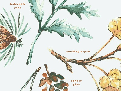 Botanical Study field guide field notes leaves aspen ferns pine cone illustration painting watercolor botanical plant study plants