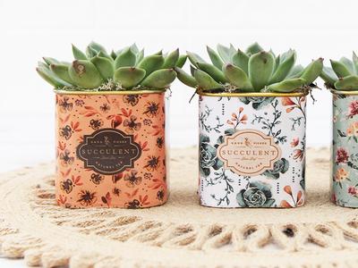 ArizonaEast Tea Tin Planters watercolor label succulents floral pattern product design planter tea tin arizonaeast