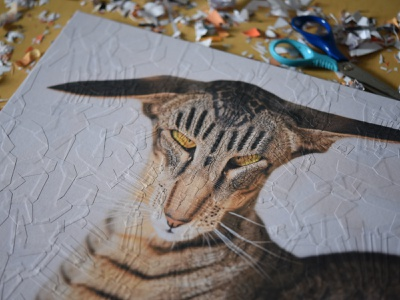 Hardy, detail studio eyes illustration collage cats cat