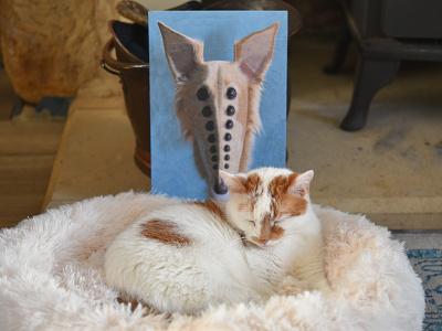 Cleo, Charlie studio dog cat eyes