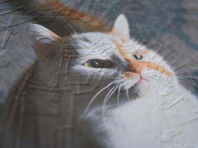 Charlie 32, detail portrait detail collage cats cat charlie
