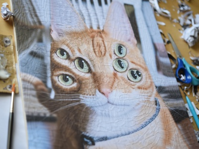 Jack, detail cat paper collage studio portrait eyes cats