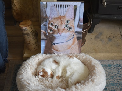 Jack and Charlie illustration charlie jack collage paper cats cat portrait
