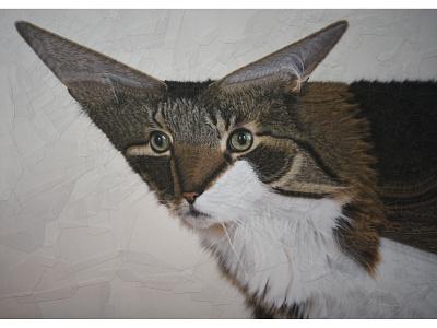 Mia cats cat portrait illustration paper collage