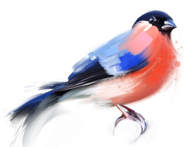 Bullfinch ui design sketch illustration bird painting bird procreate art digital painting bullfinch