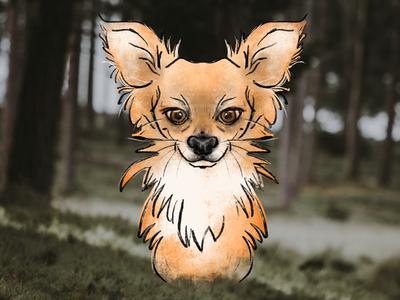 Deli, little fox