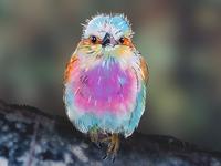 fluffy birdy