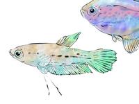 pastellfishy