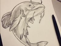 Catfish Sketch