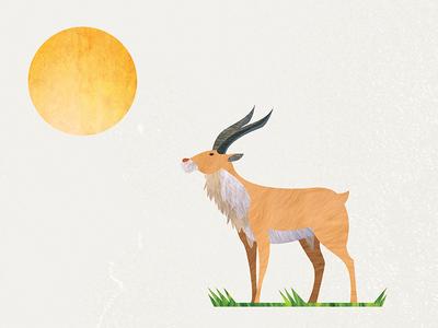 Antelope 01