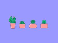 Succulent Family