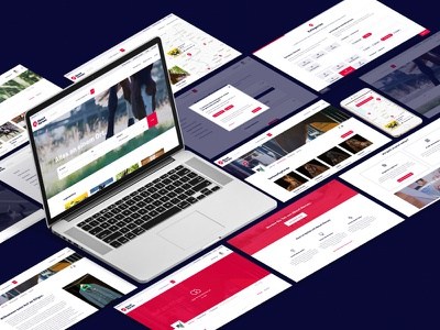 About Horses Case Study is online! website branding user experience case study concept platform horse