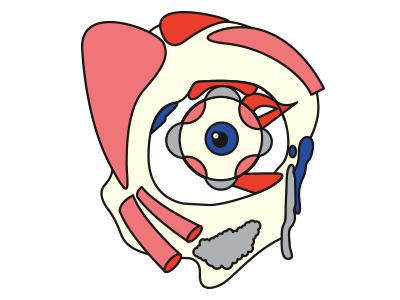 Eye medical body anatomy occhio eye