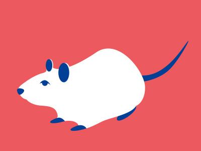 lab rat rat lab mouse pig guinea