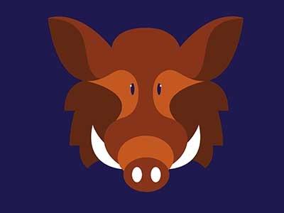 Boar wild design sketch animal boar caracter color flat illustration