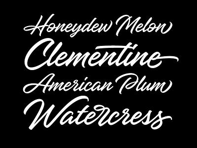 Hangbird typeface brush script script font typeface type typography