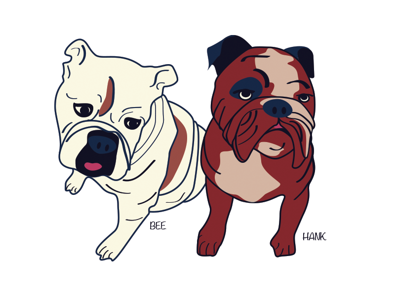 Bee & Hank bulldogs drawing illustration