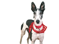 Greyhound Illustration