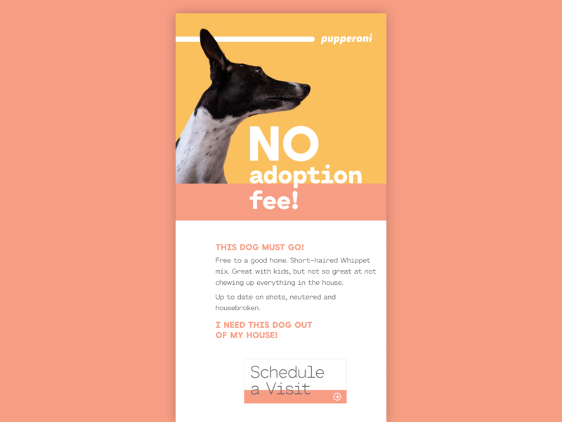 DailyUI - Day 36 - Special Offer dogs email design email blast special offer ux ui daily ui design digital design