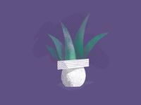 Plant 🌱
