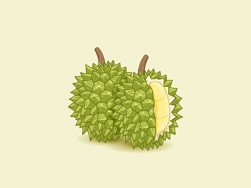 Durian  icon ilustration vector tropical fruit durian