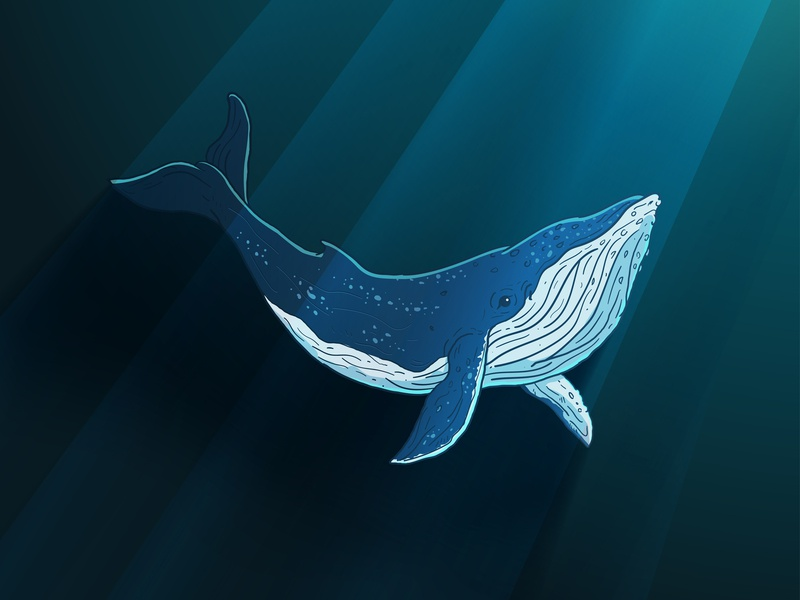 Whale deep sea whale animal illustration vector