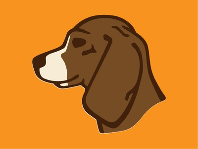 Bear the Beagle