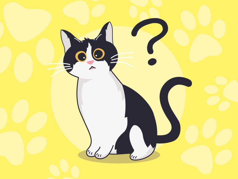 今天的罐头呢? query cat