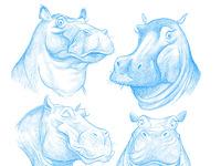 Hippos dribbb