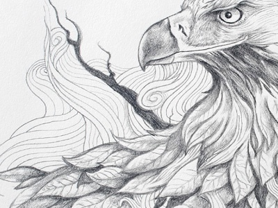 Eagle  illustration pencil drawing graphite