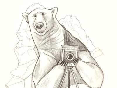 Polar christmas cards illustration polar bear camera pencil drawing sketch polar bear illustration