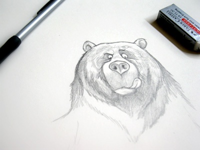 Sketching Bears illustration pencils sketch bear