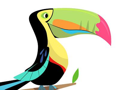 Toucan character development illustration